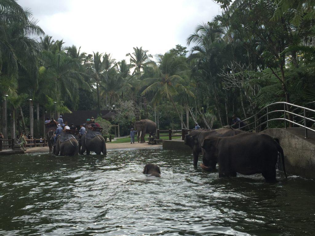 parc cu elefanti concediu în Bali