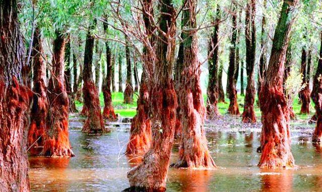 Pădurea Letea, jungla amazoniană din România. Locul în care omul cere voie naturii să intre (GALERIE FOTO)