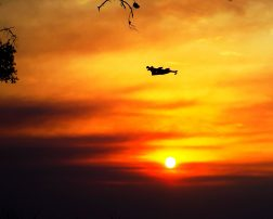 zboruri anulate grecia