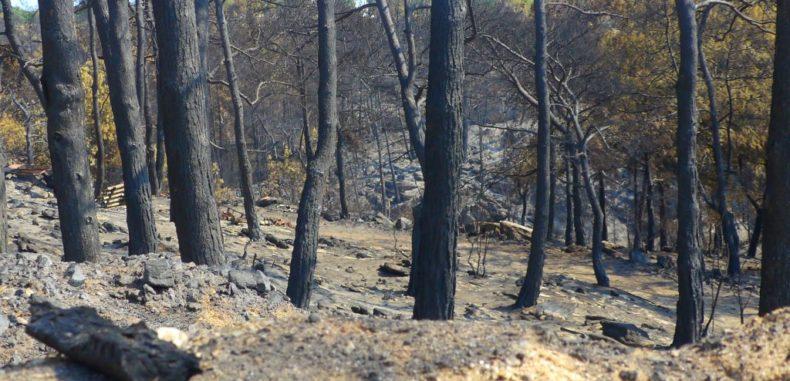 Pericol de incendii în Grecia… Atenție, români!