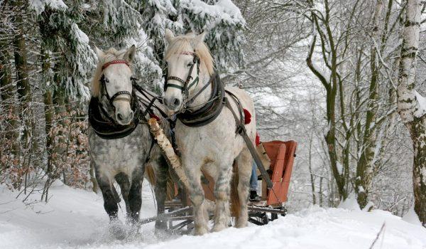 """Operatorii din turismul european cer autorităților să suspende """"măsurile de carantină ineficiente"""" și să dea drumul sezonului de iarnă."""
