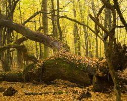 pădurea Mociar