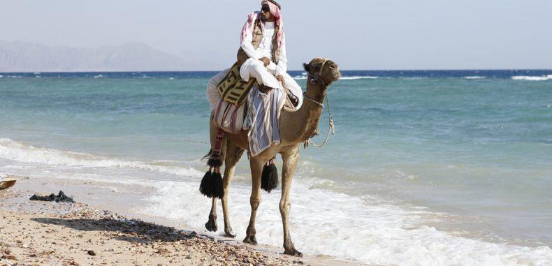 Întâlniri cu fascinantele animale din Dubai