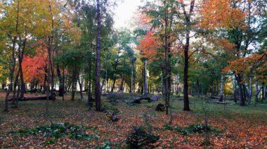 pădurea de argint agapia