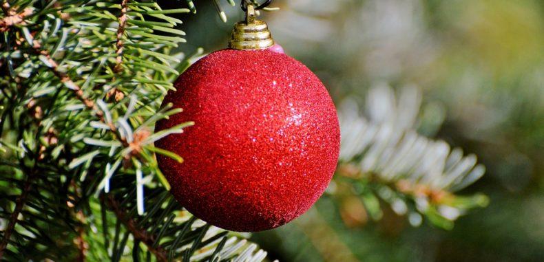 Brăduți de Crăciun scoși la vânzare de Romsilva. Prețul, între 10 și 30 de lei