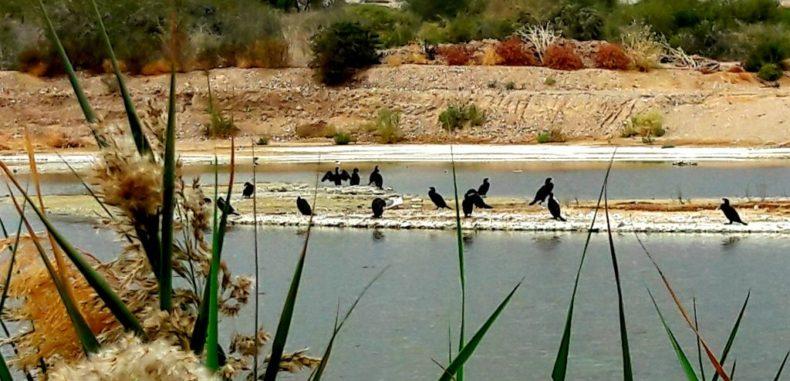 Eilat, orașul celor un miliard de păsări