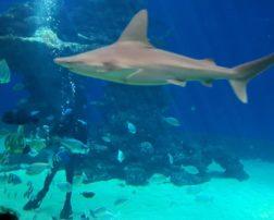 centrul subacvatic eilat