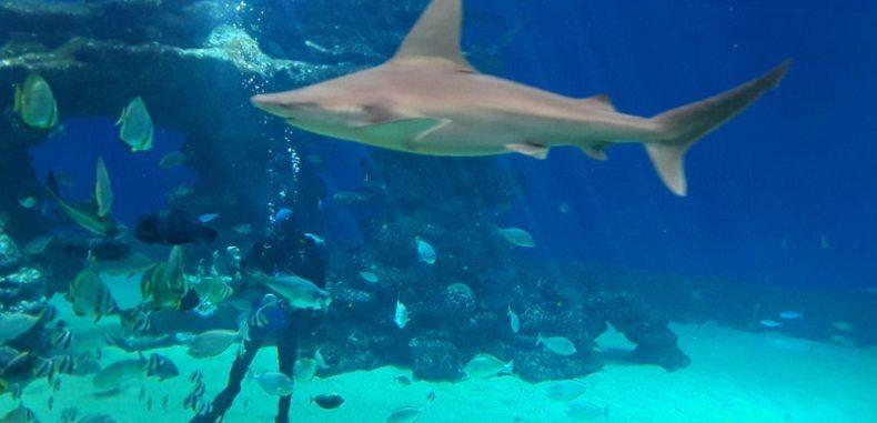 Centrul Subacvatic Eilat, locul în care magia subacvatică îți va fascina familia